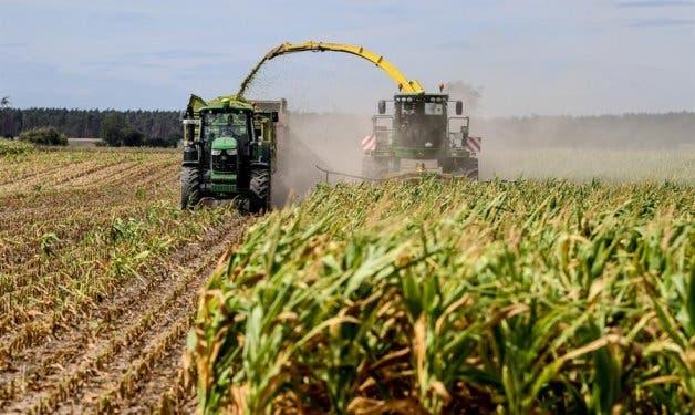 Cereales, azúcar y aceites disparan los precios mundiales de los alimentos