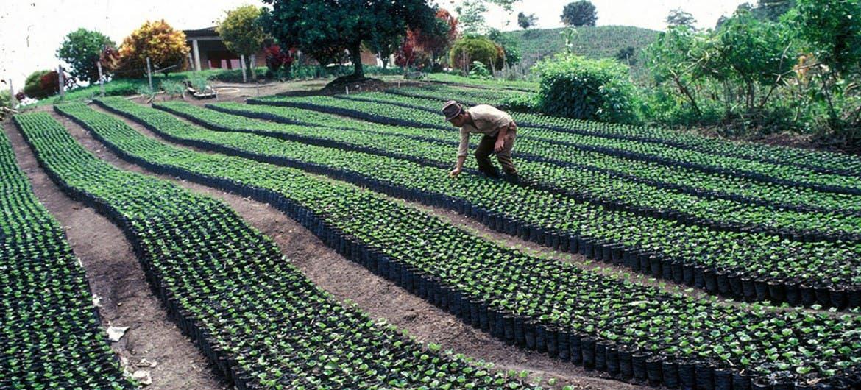 El comercio agropecuario es clave para impulsar la economía en América Latina