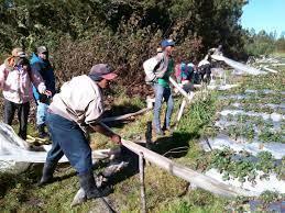 Agricultura en Valle Nuevo