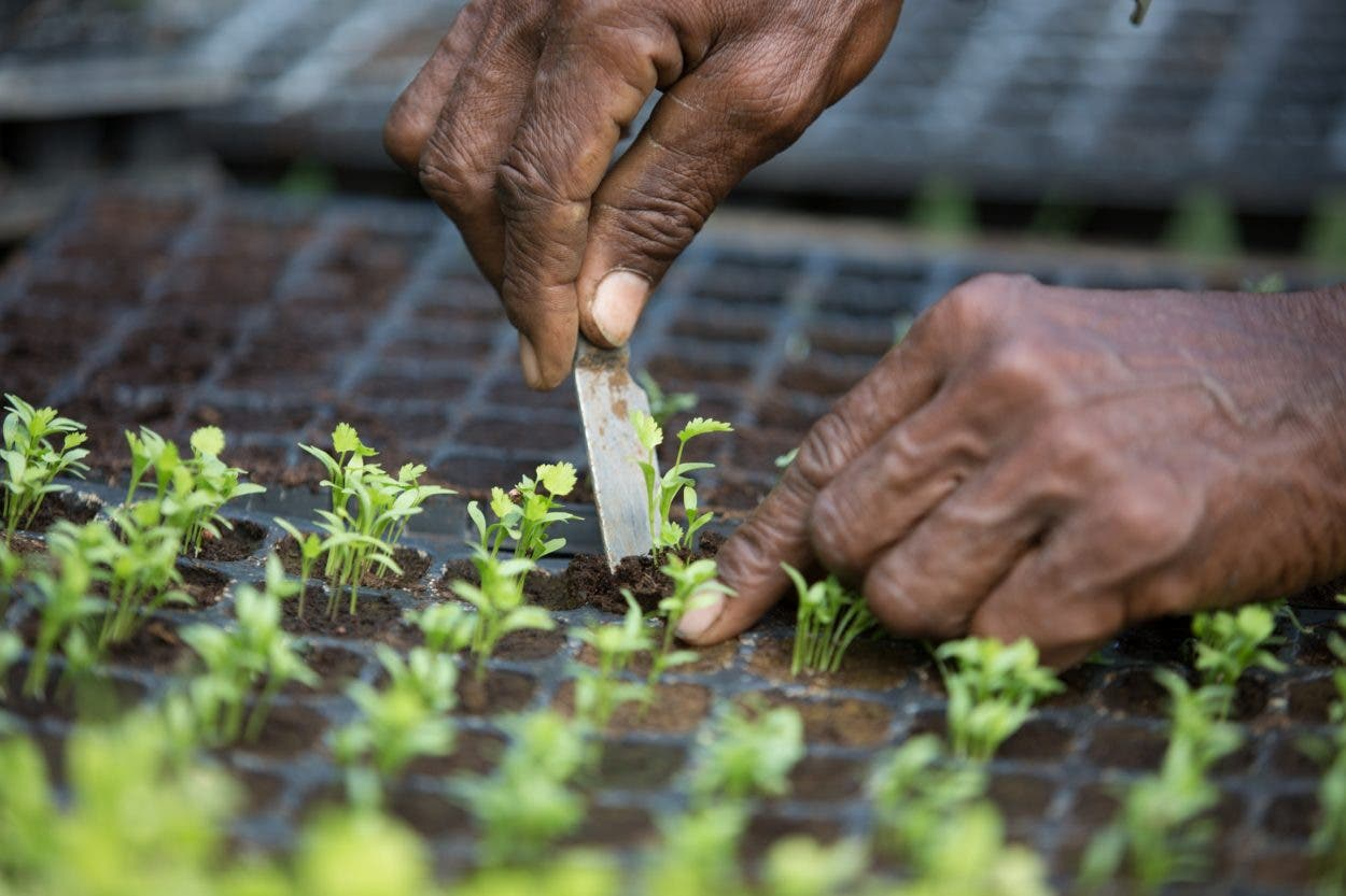 FAO colabora para que produzcan alimentos de calidad
