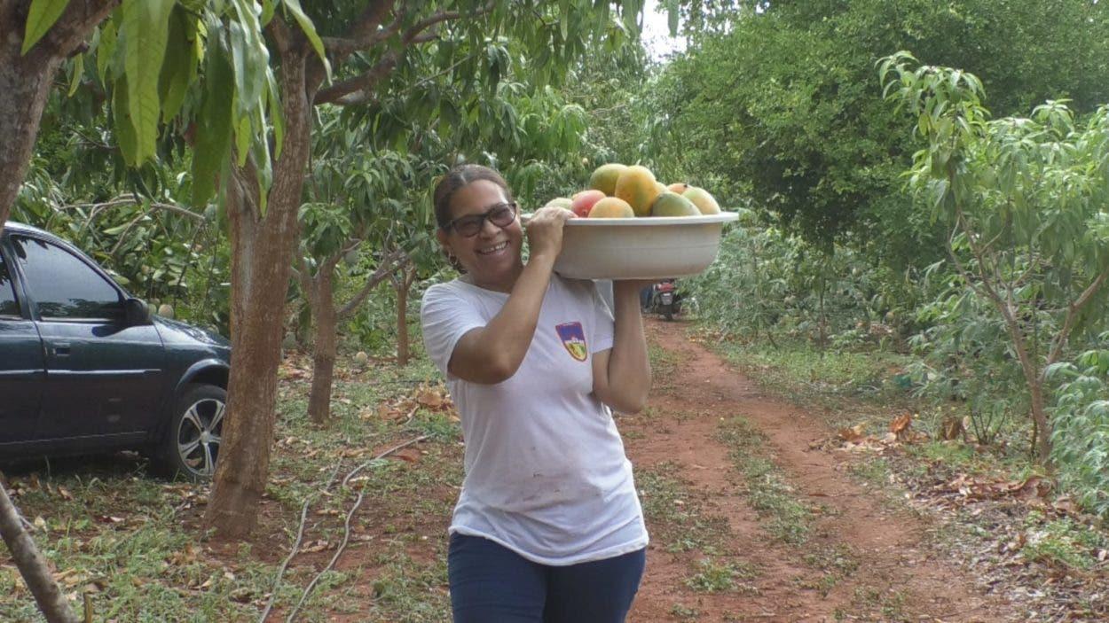 Regalan cosecha de mangos por falta mercado