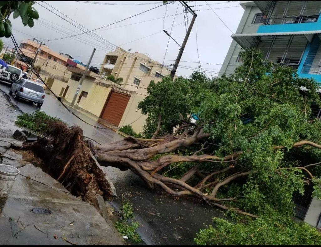 La tormenta Fred tumbo árboles e inundó calles y avenidas a su paso por República Dominicana.