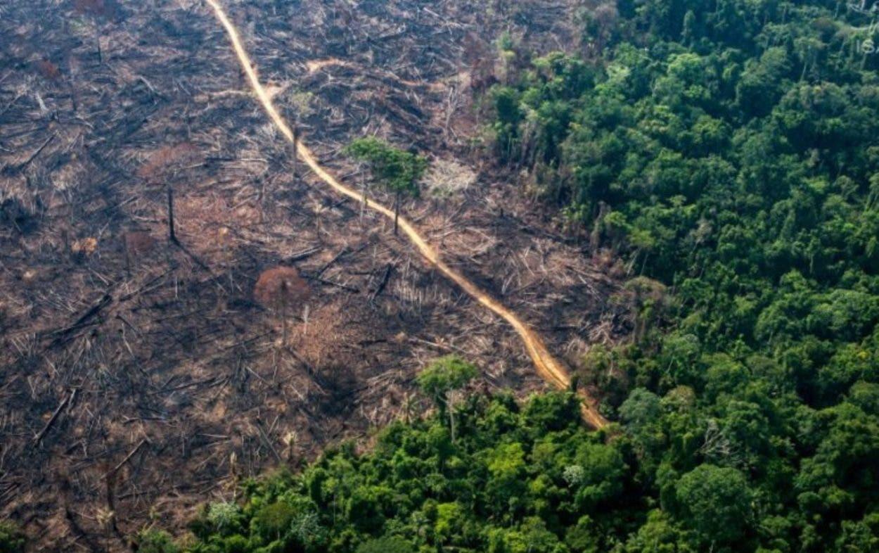 Brasil desforestó en últimos 36 años área equivalente doble de Paraguay
