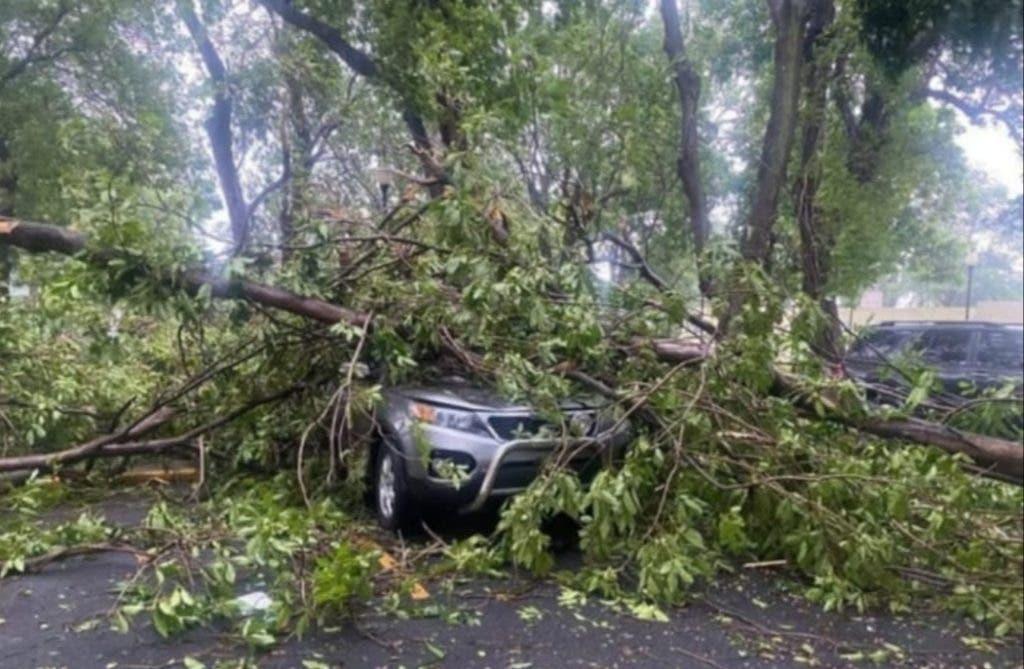 El paso de la tormenta Fred por el país provocó fuertes lluvias y vientos que dejaron varios árboles en el suelo.