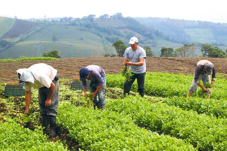 Valoran de negativo sector agropecuario primer año de Abinader