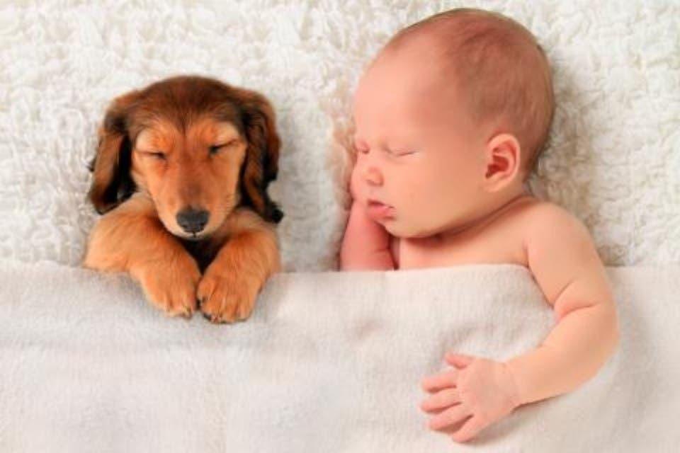 ¿Puedo dormir con mi perro?