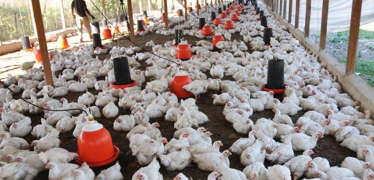 Todos quieren importar pollos