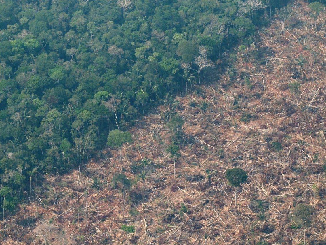 La Amazonía perdió un área equivalente a Chile en 36 años