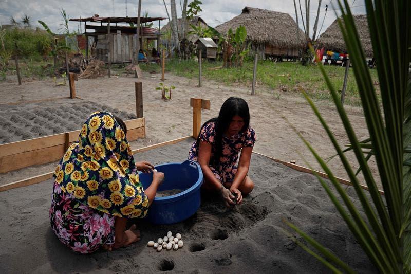 Tortugas dan alas a mujeres indígenas