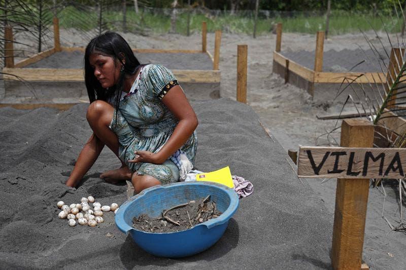 DATEM DEL MARAÑÓN (PERÚ),.- Una mujer Kandozi de la comunidad Musa Karusha siembra huevos de la tortuga Taricaya en unas playas artificiales, el 8 de septiembre de 2021, en la provincia del Datem del Marañón (Perú). Cuando su marido la condenó a la soltería por no poder tener hijos, Balbina Sundi Akumbari, del pueblo Kandozi, halló en las tortugas taricayas su mejor aliado para hacerse valer por sí misma y ayudar a otras mujeres como ella que resisten al flagelo del machismo tan arraigado en la recóndita comunidad donde vive, en las profundidades de la Amazonía peruana. EFE/ Paolo Aguilar