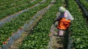 FAO considera agricultura América Latina y el Caribe debe transformarse