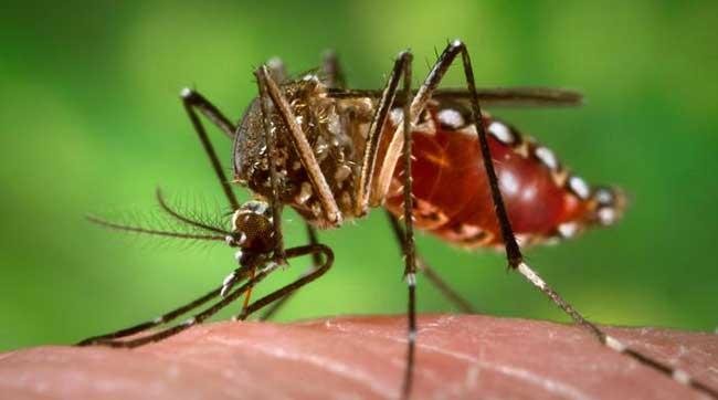 Aumentan casos de Dengue en el país