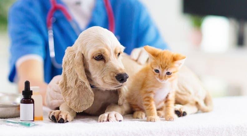 Vacunarán a perros y gatos