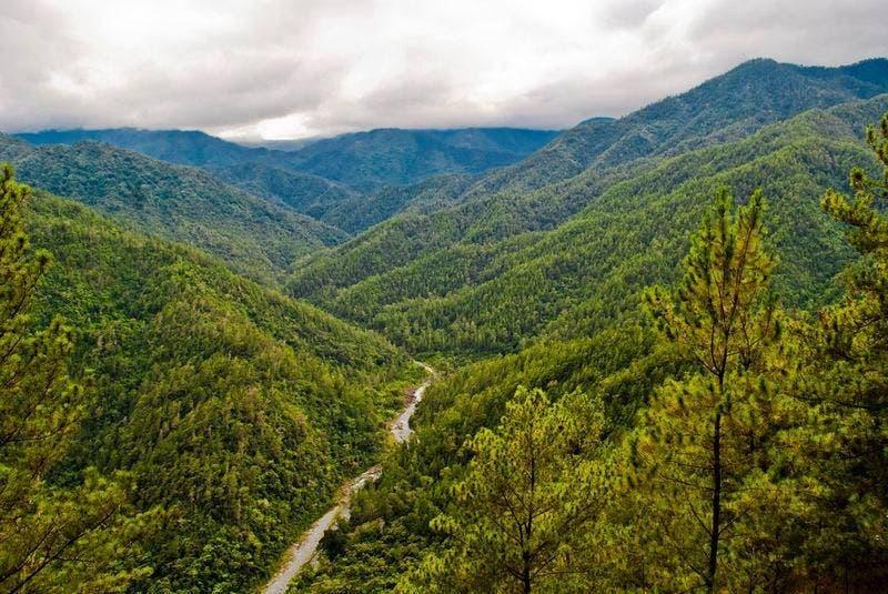 RD tiene un 42% de cobertura forestal frente al 2% de Haití