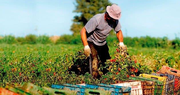 Recuperación poscovid-19 puede impulsar agricultura sostenible