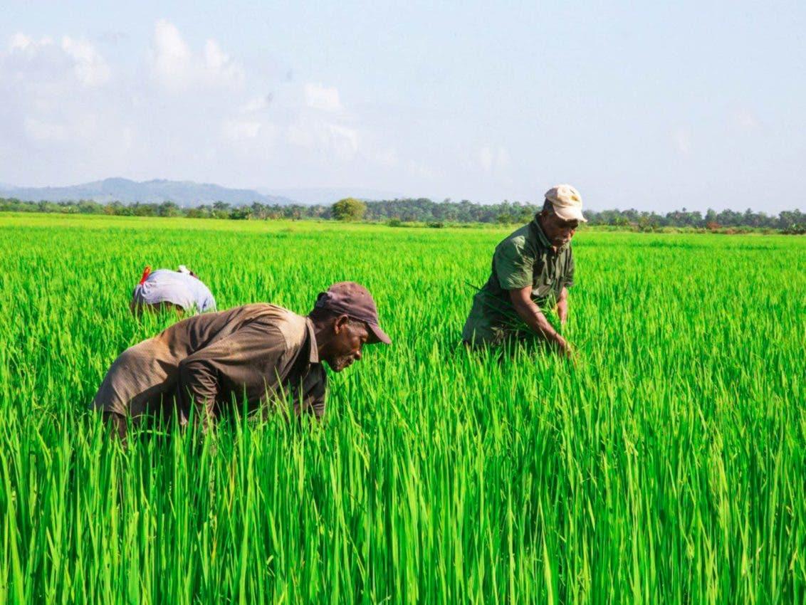 Dice productores agropecuarios beneficiados por Inespre