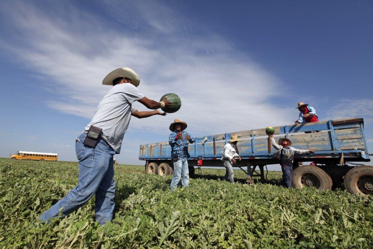 """EE. UU. """"necesita"""" regularizar a trabajadores del campo"""