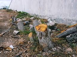 Someten director de Ámina por tala árboles